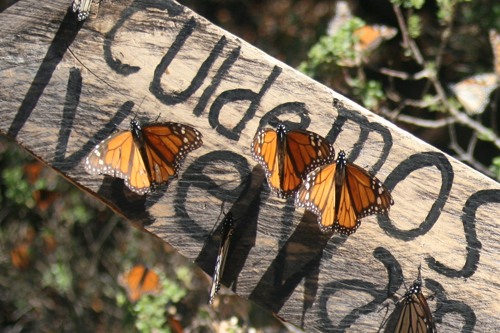 personal essays nonfictions the lifecycle of butterflies